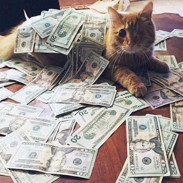rich-cats (5)
