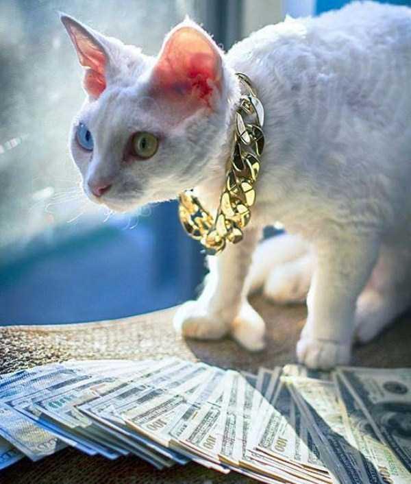 rich-cats (6)