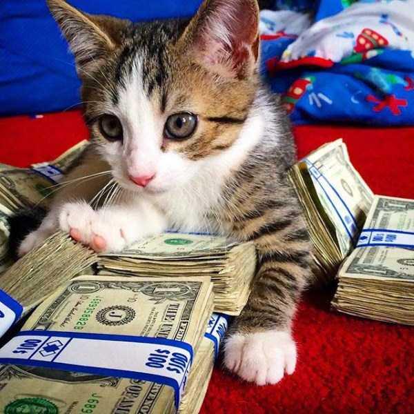 rich-cats (7)