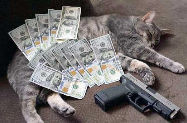 rich-cats (8)