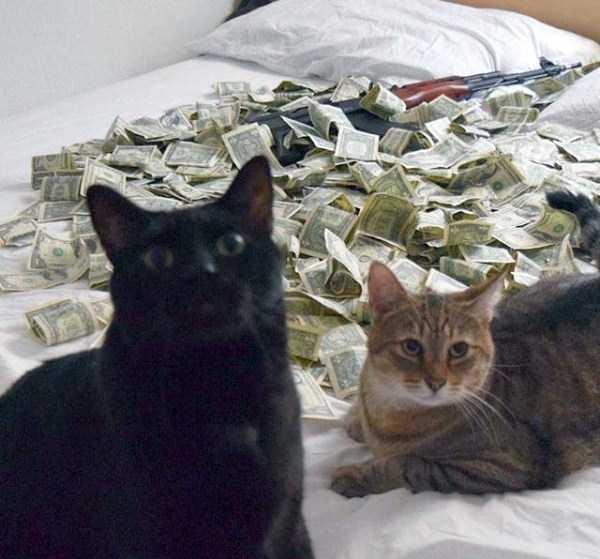 rich-cats (9)