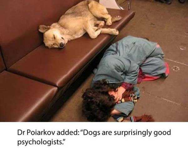 stray-dogs-moscow-metro (11)