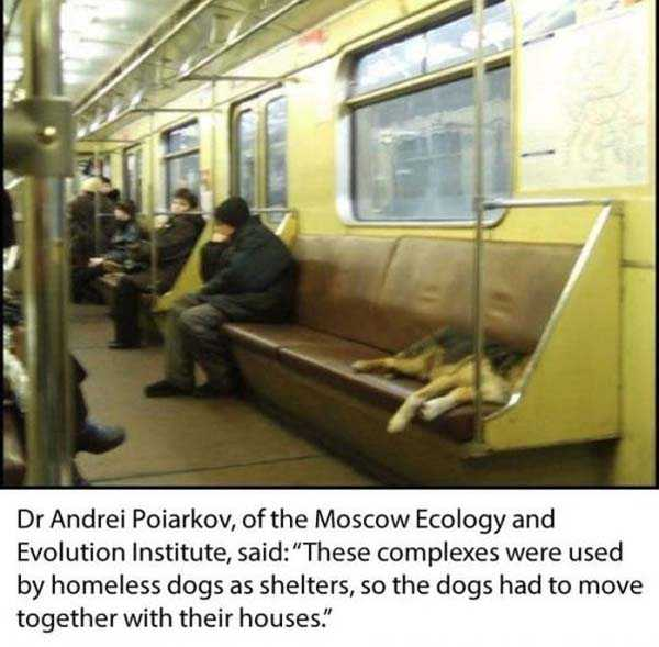stray-dogs-moscow-metro (6)