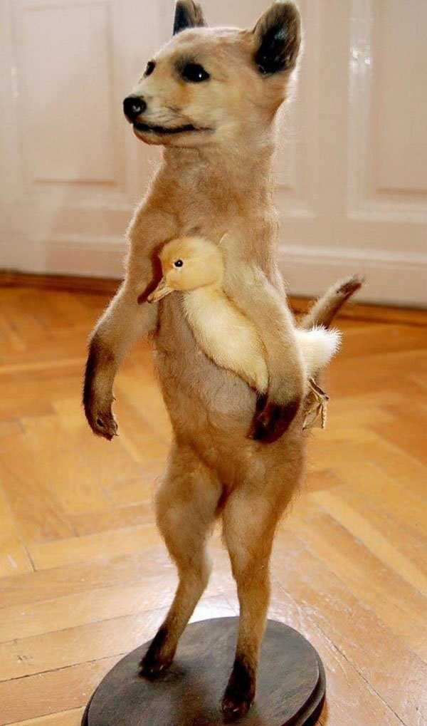 taxidermy-fails (12)