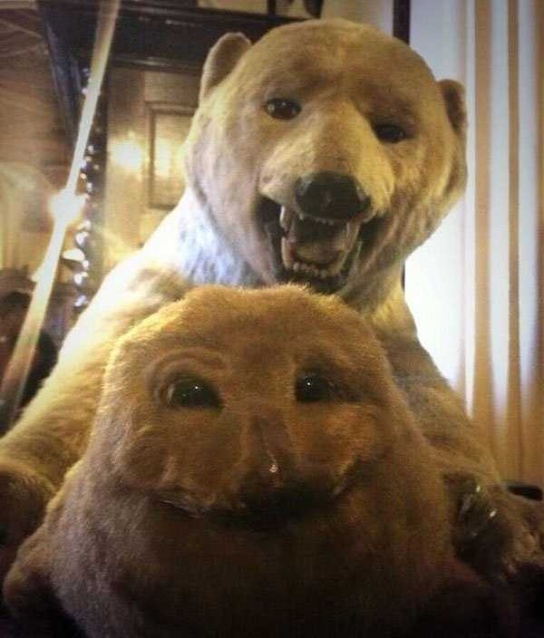 taxidermy-fails (13)