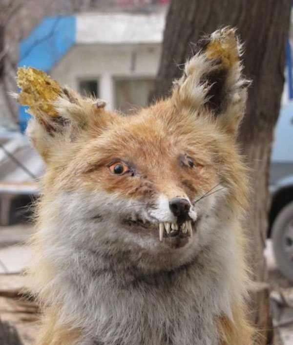 taxidermy-fails (15)