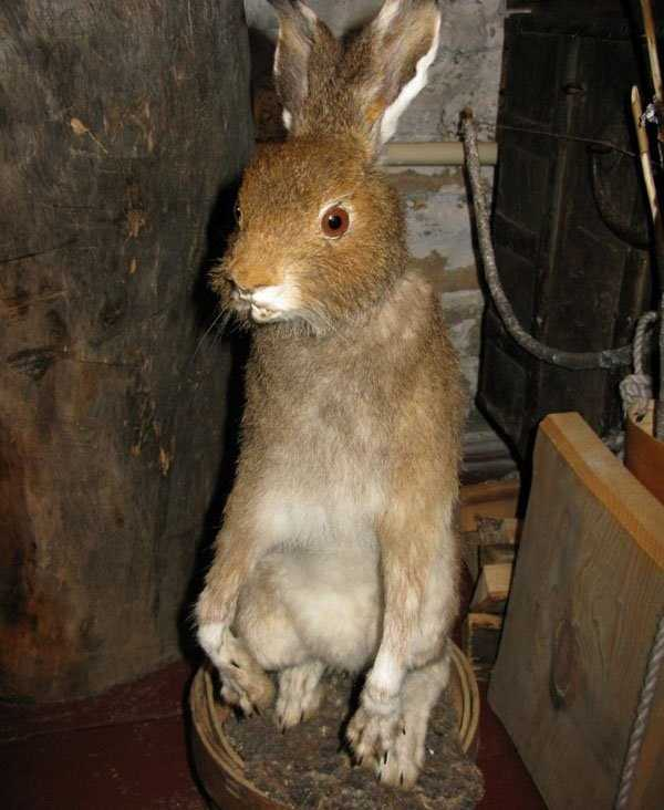 taxidermy-fails (24)