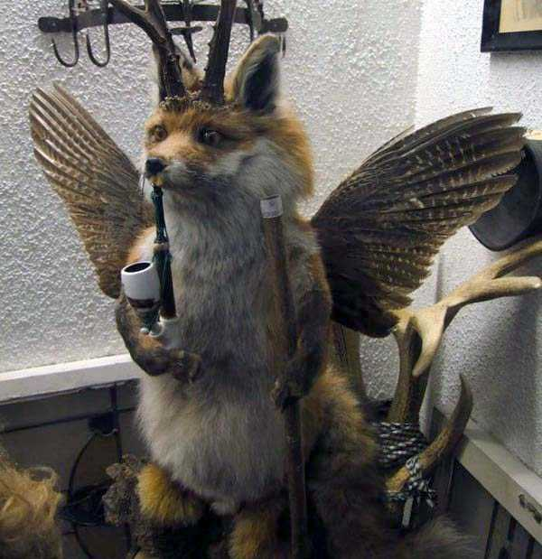 taxidermy-fails (30)