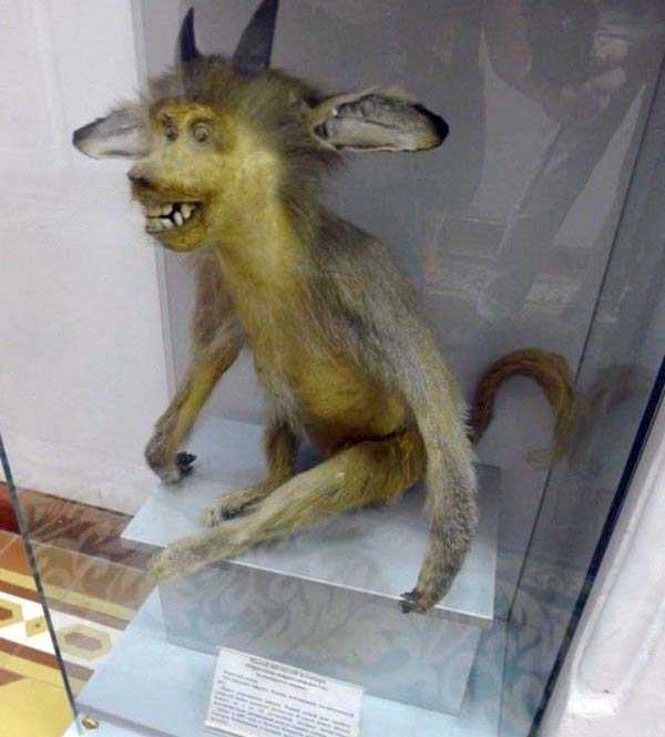 taxidermy-fails (33)