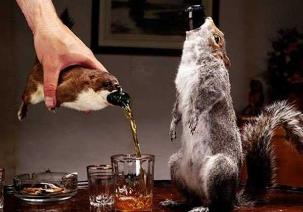 taxidermy-fails (7)