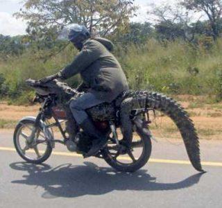 Ah, Glorious Africa (32 photos)