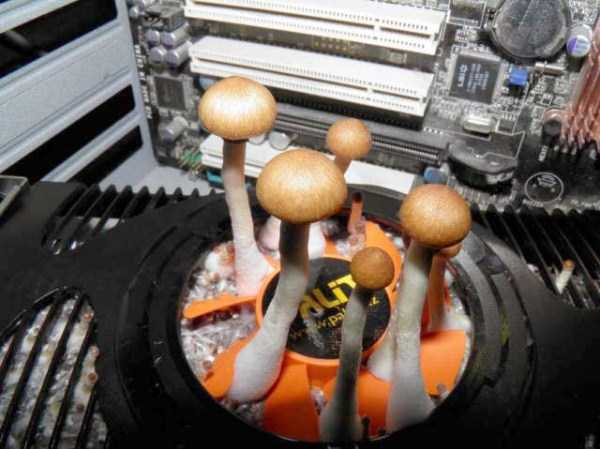 mushrooms-in-pc-case (6)