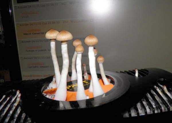 mushrooms-in-pc-case (7)