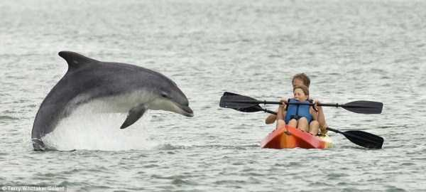 perfectly-timed-pics (1)
