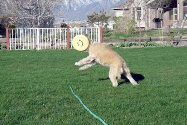 perfectly-timed-pics (13)