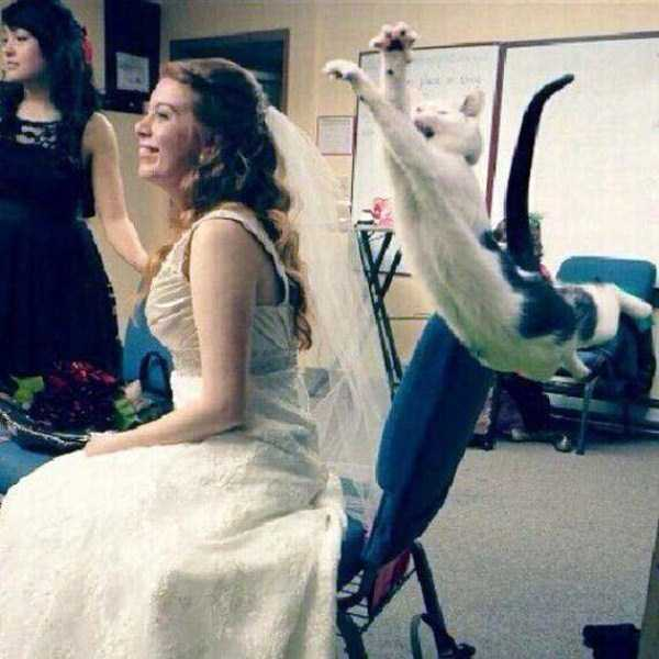 perfectly-timed-pics (15)