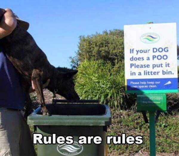 pics-with-funny-captions (36)