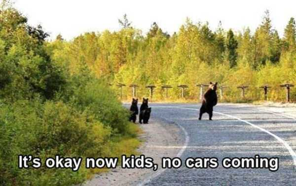 pics-with-funny-captions (40)