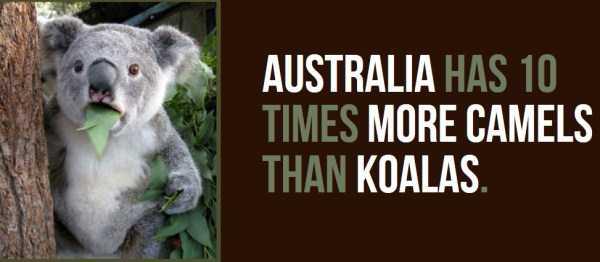 australian-facts (1)