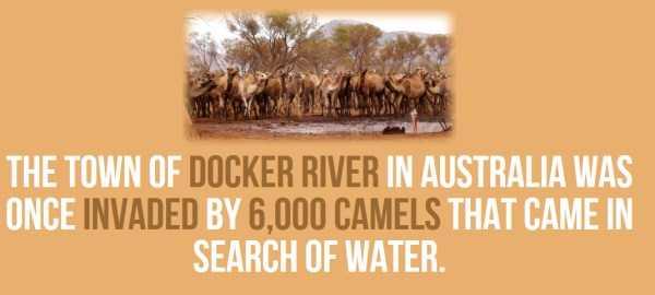 australian-facts (15)