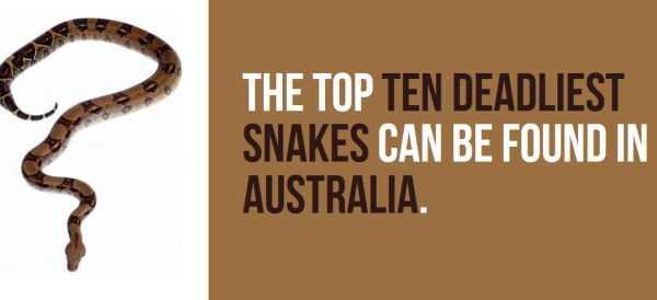 australian-facts (19)