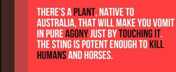 australian-facts (20)