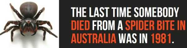australian-facts (22)
