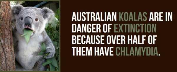 australian-facts (27)