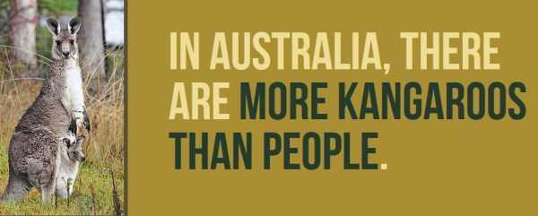 australian-facts (3)