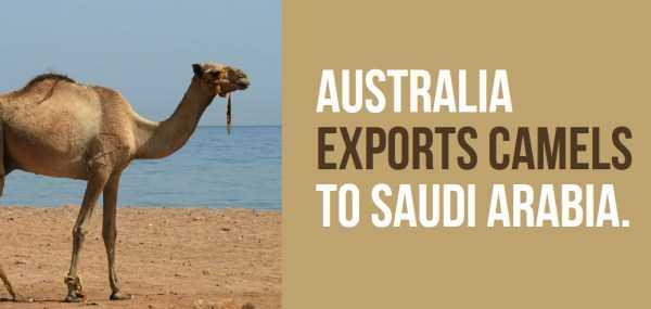 australian-facts (31)