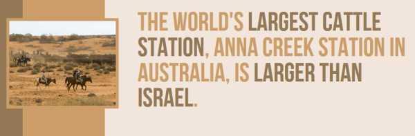 australian-facts (34)