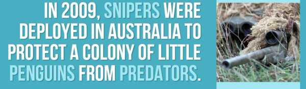 australian-facts (36)