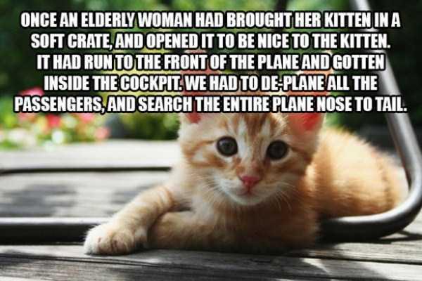 flight-attendants-weird-things (5)