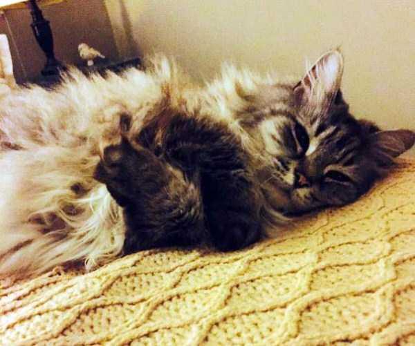 fluffy-cats-kittens (100)