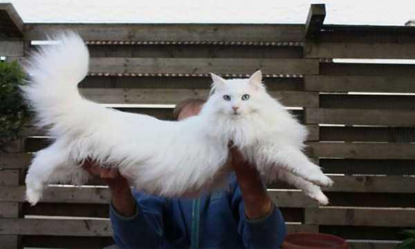 fluffy-cats-kittens (12)