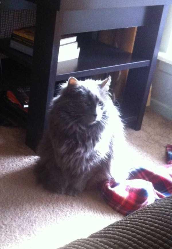 fluffy-cats-kittens (13)