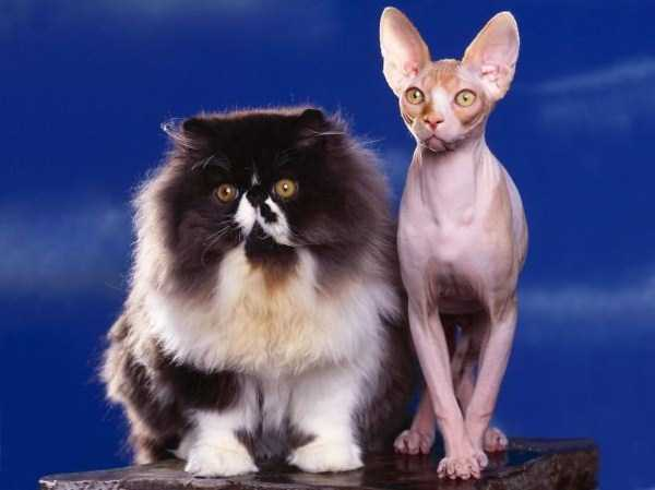 fluffy-cats-kittens (17)