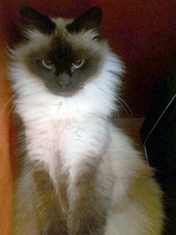 fluffy-cats-kittens (18)
