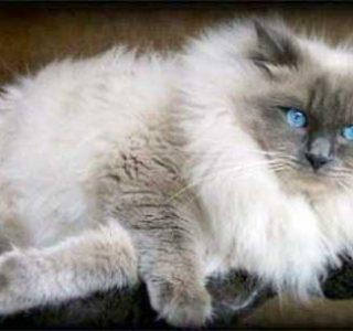 A Bunch of Adorable Fluffy Cats (100 photos)