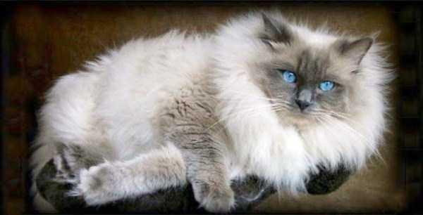 fluffy-cats-kittens (19)