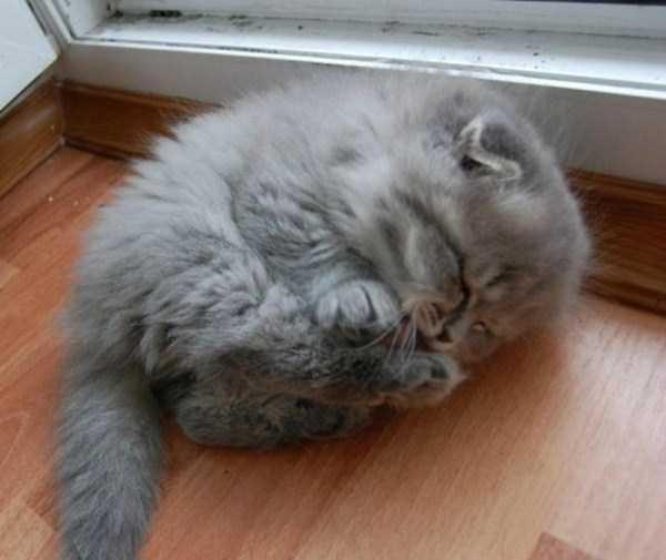 fluffy-cats-kittens (20)