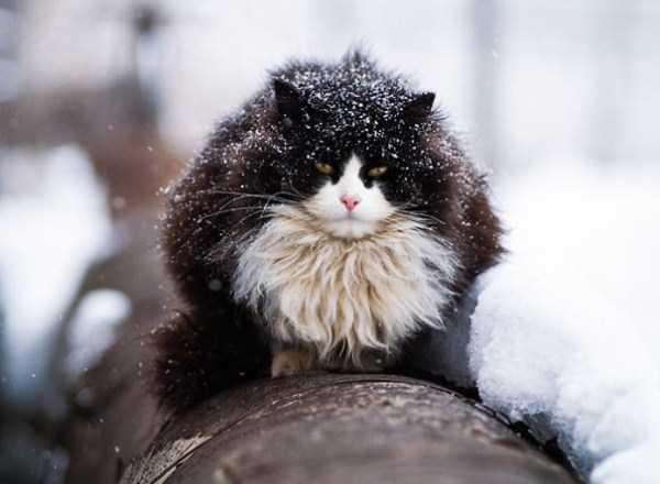 fluffy-cats-kittens (22)