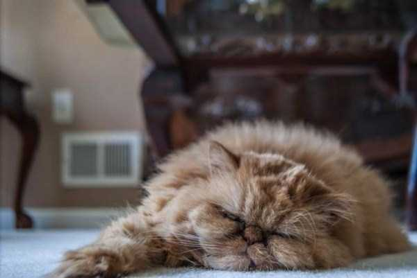 fluffy-cats-kittens (25)