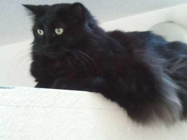 fluffy-cats-kittens (27)