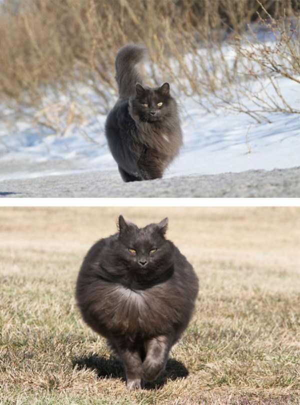 fluffy-cats-kittens (29)