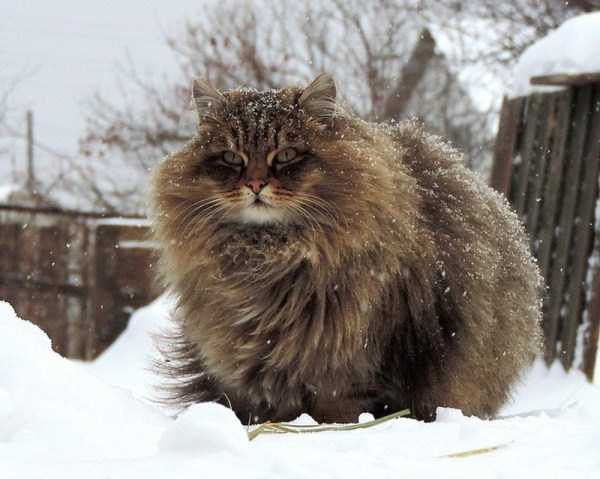 fluffy-cats-kittens (3)