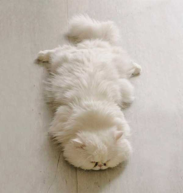 fluffy-cats-kittens (33)