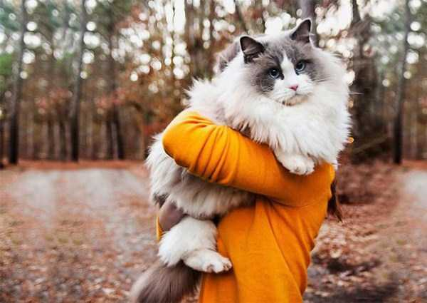 fluffy-cats-kittens (34)