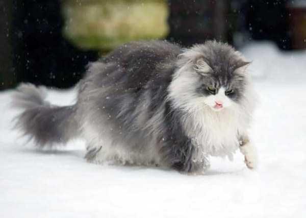 fluffy-cats-kittens (39)