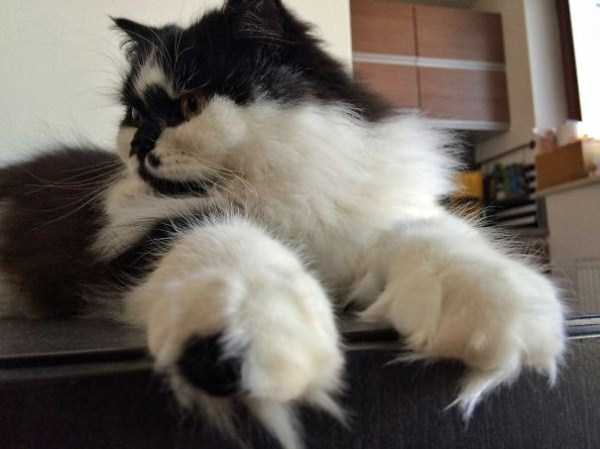 fluffy-cats-kittens (40)
